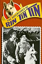 Image of The Adventures of Rin Tin Tin: Rin Tin Tin and the Christmas Story