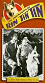 The Adventures of Rin Tin Tin (1954) Poster