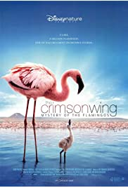 Watch Movie The Crimson Wing: Mystery of the Flamingos (2008)