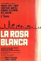 Image of Rosa blanca