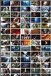 Terrence Malick's The Tree of Life: A Visionary's Folly