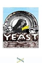 Image of Yeast