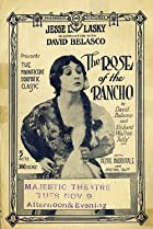 Image of Rose of the Rancho