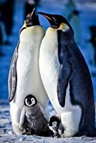 Image of Snow Chick: A Penguin's Tale