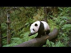 Pandas: The Journey Home