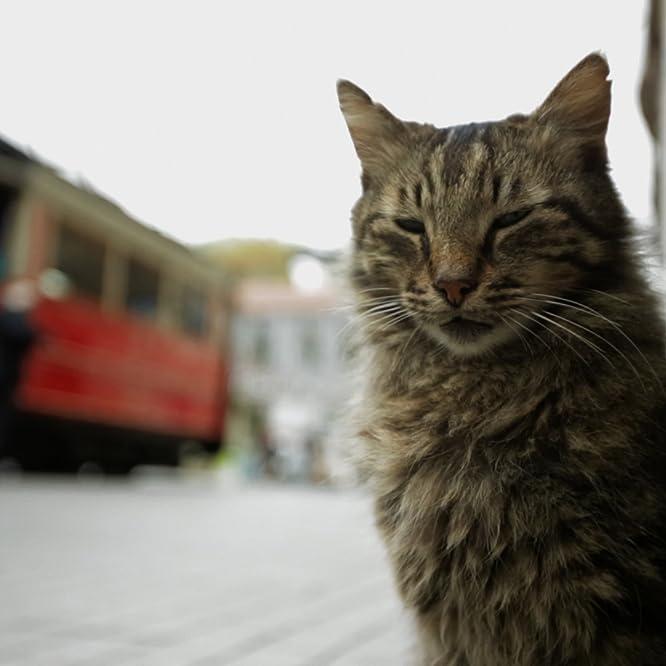 Kedi (2016)