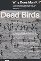 Image of Dead Birds