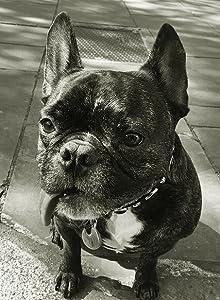 Gary the Dog