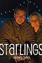 Image of Starlings