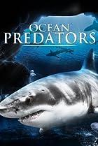 Image of Ocean Predators