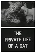 Image of The Private Life of a Cat
