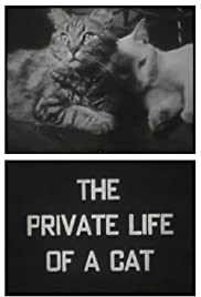 The Private Life of a Cat (1947) Poster - Movie Forum, Cast, Reviews