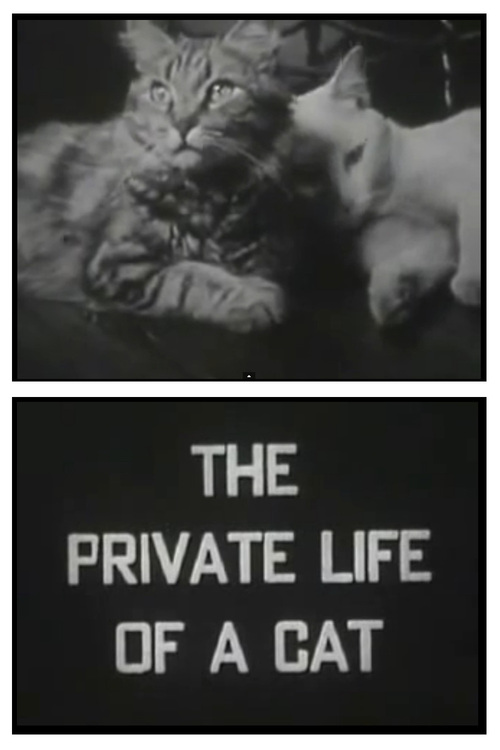 image The Private Life of a Cat Watch Full Movie Free Online