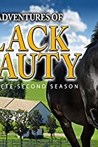 Image of The New Adventures of Black Beauty: The Wedding