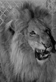 Wilbur in the Lion's Den Poster