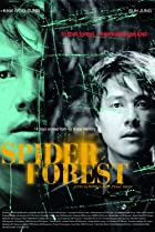 Image of Spider Forest