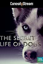Image of Secret Life of Dogs