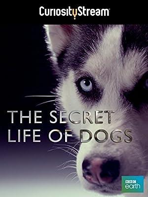 Secret Life of Dogs (2013)