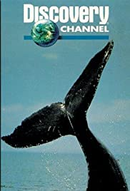 In the Company of Whales Poster