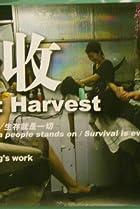 Image of Wheat Harvest