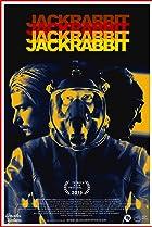 Image of Jackrabbit