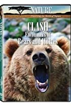 Image of Nature: Clash: Encounters of Bears and Wolves