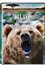 Clash: Encounters of Bears and Wolves Poster