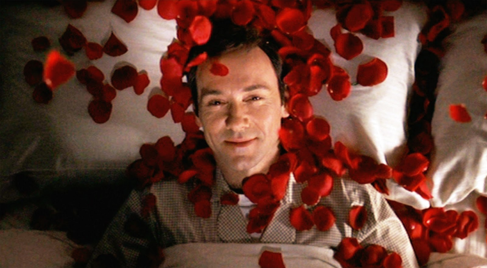 the red rose in american beauty