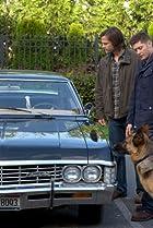 Image of Supernatural: Dog Dean Afternoon