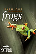 Image of Nature: Fabulous Frogs