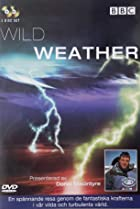 Image of Wild Weather