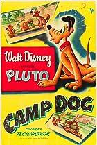 Image of Camp Dog