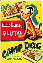 Camp Dog Poster