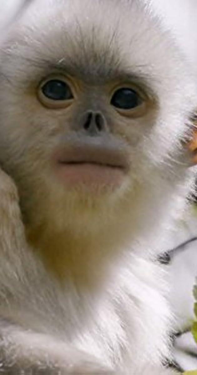 Paslaptingos Šangri La beždžionės / Mystery Monkeys of Shangri-La (2015) online