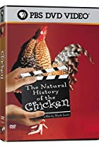 Image of The Natural History of the Chicken
