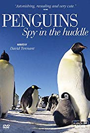 Penguins: Spy in the Huddle Poster - TV Show Forum, Cast, Reviews