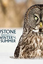 Yellowstone: Wildest Winter to Blazing Summer