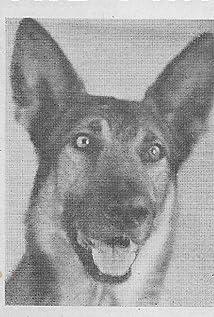 Kazan the Wonder Dog Picture