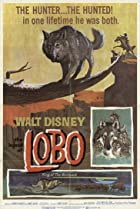 Image of The Legend of Lobo