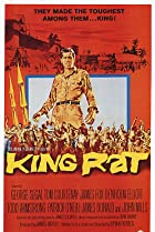 Image of King Rat