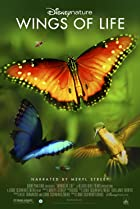 Image of Disneynature: Wings of Life