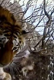 Siberian Tiger Quest Poster
