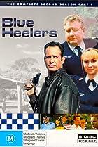 Image of Blue Heelers