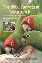 The Wild Parrots of Telegraph Hill (2003) Poster