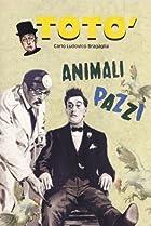 Image of Animali pazzi