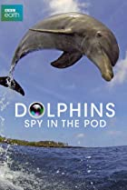 Image of Dolphins: Spy in the Pod