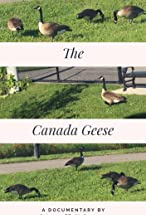 Primary image for The Canada Geese