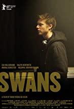 Primary image for Swans