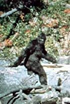 Image of Patterson-Gimlin Film