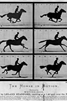 Image of Sallie Gardner at a Gallop